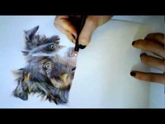 ▶ PART 1 Speed Drawing Tricolour Border Collie Dog Portrait in Coloured Pencils by Alice Ladkin - YouTube colour pencil, color pencil, colli dog, arttutori, dog portraits