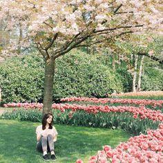 #keukenhof #flowers #gardens #spring #nature #europe #holland #trip by misty_rr