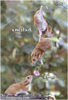 Sex life of squirrells grammar foth