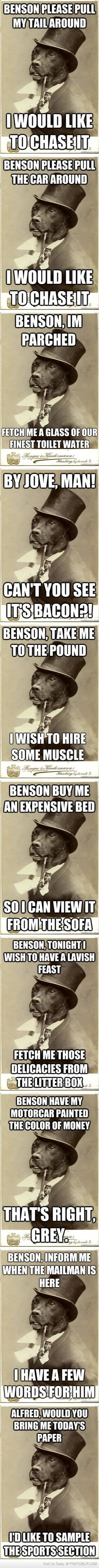 Best Of The Old Money Dog Meme