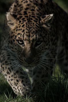 Beautiful creature! Powered by: @JeffThings