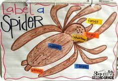 Today we took some time to talk about the parts of a body and diagrams/labels in nonfiction books.  We labeled the spider's body as a class 2nd Grade Classroom, Science Classroom, Witch School, Classroom Charts, Autumn Activities, Reading Activities, Schools First, English Writing, Reading Lessons