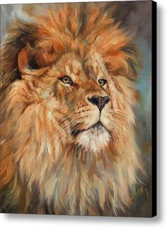 Lion Canvas Print / Canvas Art By David Stribbling