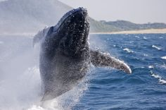 Explore South Africa holidays and discover the best time and places to visit. Wetland Park, Nature Reserve, Africa Travel, Lonely Planet, South Africa, Whale, Places To Visit, Southern, Homeland