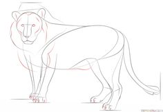 How to draw a lion step by step. Drawing tutorials for kids and beginners.
