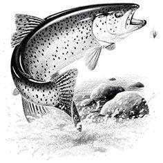 Salmon Tattoo, Trout Tattoo, Wood Burning Stencils, Wood Burning Patterns, Fish Sketch, Fish Drawings, Wildlife Art, Wildlife Tattoo, Salmon Fishing