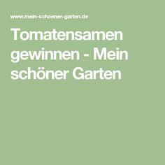 Tomatensamen gewinnen - Mein schöner Garten
