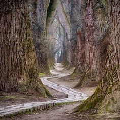 Path in the woods - Andrew Lambie