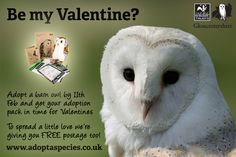 Will you be our Valentine? Adopt a barn owl for Valentines and we'll help spread a little love by giving you FREE postage!  http://www.gloucestershirewildlifetrust.co.uk/how-you-can-help/give/adopt-species/adopt-barn-owl