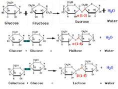 Amino Acids Chart Handy For Any Biochem Major  Science