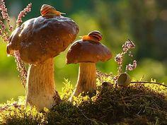 Faszinierender Einblick in die Welt der Schnecken: Fotos von Vyacheslav Mishchenko - detailverliebt.de