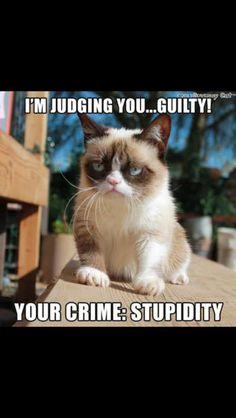 Grumpy cat, grumpy cat meme, grumpy cat quotes, funny grumpy cat quotes, grumpy cat jokes …For the funniest quotes and hilarious pictures visit www. Grumpy Cat Quotes, Cat Jokes, Grumpy Cat Humor, Pet Quotes, Funny Animal Memes, Funny Animal Pictures, Funny Animals, Cute Animals, Funny Memes