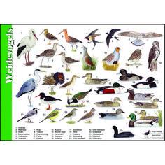 van der Meulen - birds of the meadow Animals Of The World, Animals And Pets, Animal Plates, Bird Tree, Fauna, Whimsical Art, Bird Watching, Beautiful Birds, Pet Birds