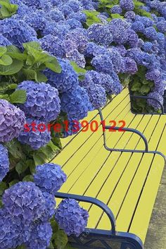 Product Type: Bonsai Size: Small,Mini,Large,Medium Climate: Temperate Style: Perennial Applicable Constellation: Virgo Full-bloom Period: Summer Flowerpot: Excluded Classification: Novel Plant Functio