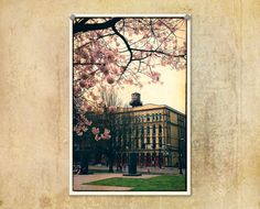 Portland Oregon Old Town Springtime Cherry by ThePDXPhotographer, $30.00