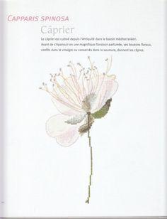 Gallery.ru / Фото #25 - Herbier - Mosca