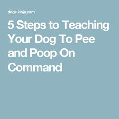 5 Steps to Teaching Your Dog To Pee and Poop On Command