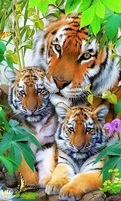 mamá tigresa y cachorritos