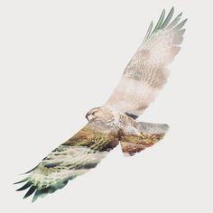 """Hawk Eyes""  .  Percobaan bikin Double Exposure pakek HP  Selection sama ngalusinnya minta ampun -_-""  Images sources Google & 500px  .  (Open for Commissions)  .  #design #designforsale #hawk #animal #bird #animalplanet #sky #nature #wild #landscape #google #500px #pstouch #adobe #Photoshop #picoftheday #wing #fly #mountain #hawkeye #designer #d_expo #doubleexposure #double #exposure #surrealism #art #artwork #artoftheday #asus"