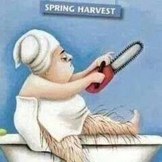 Glad that didn't happen this winter! #hairy #shavelegs #itsthattime #springishere #springharvest