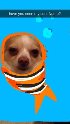Marlin | These Snapchats Of A Dog Turned Into Disney Princesses Are Fantastic