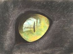 Visions  inside a cat's eye
