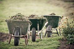 garden work #gardening