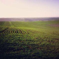 Barley field...Colorful!