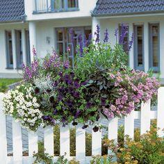 Balkon-Ideen: Balkonkästen bepflanzen dreimal anders