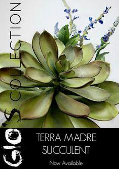 Terra madre succulent can you believe its sugar!