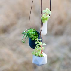 OMG! Let me tell you how much I love this!   Wearable Planter No 1 in Black by wearableplanter on Etsy, $39.00
