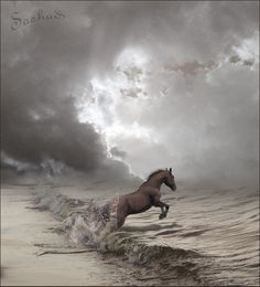 A beautiful horse jumping into the ocean. Another inspiration for RAGING SEA: The Legend of Lancelot by Kim Headlee, volume 3 of The Dragon's Dove Chronicles. All The Pretty Horses, Beautiful Horses, Animals Beautiful, Cute Animals, Majestic Horse, Clydesdale, Mundo Animal, Horse Pictures, Horse Love