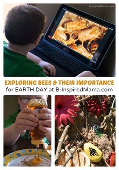 Why Are Bees Important? - Earth Day Learning for Kids -
