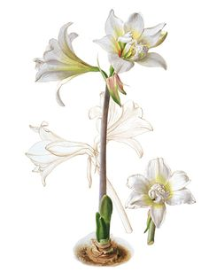 Graham Rust - Botanical