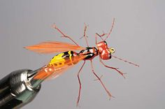 Foam Wasp Fly - Fly Rod and Reel Magazine 2010 September - Wet Flies and Wasps