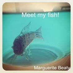Happy Easter!  Meet my fish!  Marguerite