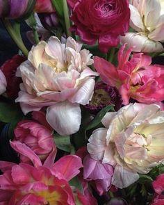 Exotic Flowers, Amazing Flowers, Beautiful Flowers, Flower Prints, Flower Art, Macro Pictures, Peonies And Hydrangeas, Flower Photos, Botanical Art