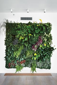 Indoor plant wall garden and eye in the sky: urban apartment Vertical Garden Wall, Vertical Gardens, Indoor Plant Wall, Indoor Plants, Wall Garden Indoor, Garden Wall Art, Air Plants, Cactus Plants, Indoor Outdoor