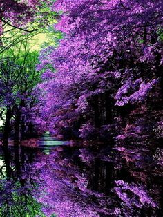 Download Purple Japanese Garden Mobile Wallpaper 39629 from Mobile Wallpapers. This Purple Japanese Garden mobile wallpaper is compatible for Nokia, Samsung, Htc, Imate, LG, Sony Ericsson mobile phones.rate it if u like my upload Down 240x320, android wallpaper, Autumn, cool river, garden, imate, iPhone Wallpaper, LG, mobile wallpaper, Nokia, Purple Japanese Garden, Samsung, trees %Êtegory_description%%