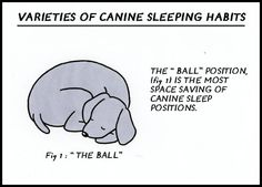 From today's Dog In Charge comic strip  March 30, 2012