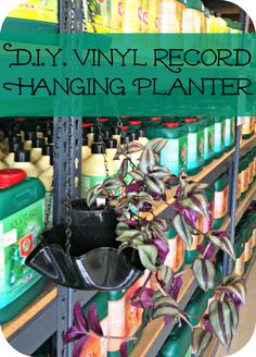 DIY Vinyl Record Hanging Planter --- You can probably plant your plant right in the bowl itself.