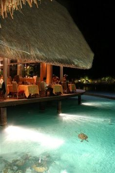 Bora Bora Island ~ Exotic Place In The World  I'll take a table for one near the turtle please.