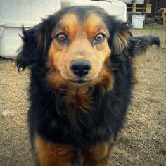 Tic tics es un perrito muy cariñoso, juguetón y activo. Es explorador y excelente compañero. Ya está vacunado, esterilizado y desparasitado.