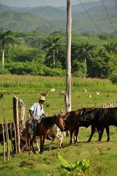 Cattle rancher . Cuba