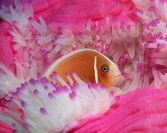 pink sea life    PINK! This year's very popular color can even be found under the sea ...