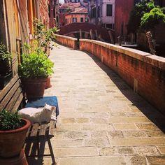 Venezia...❄