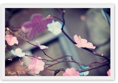 arbre a fleur