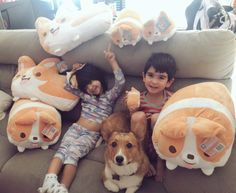 OMGGGGGG!!!!! THE LITTLE NUGGETS AND JET WHO GO SO BIG AND A BUNCH OF CORGI PLUSHYS