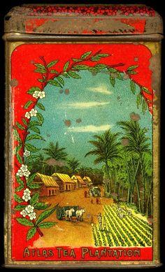 tea tin decorated with Atlas Tea Plantation scene, likely early-mid 20th century, litho tin