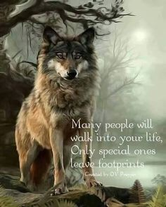 Sometimes a Wolf does. It is a memory you never forget. Wolf Qoutes, Lone Wolf Quotes, Wolf Photos, Wolf Pictures, Wolf Artwork, Wolf Stuff, Wolf Spirit Animal, Native American Quotes, Wolf Love